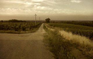 vini testa vigneto tramonto nuvoloso